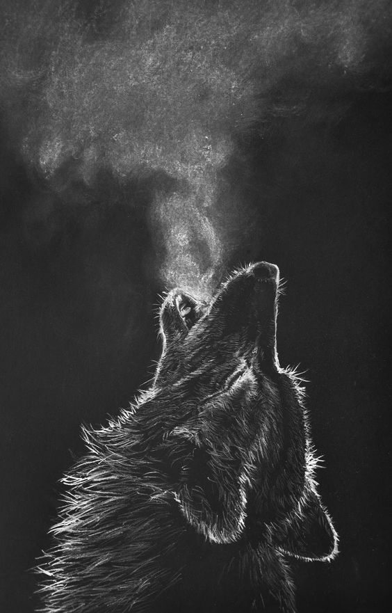 white-charcoal-drawing-black-paper-wolf