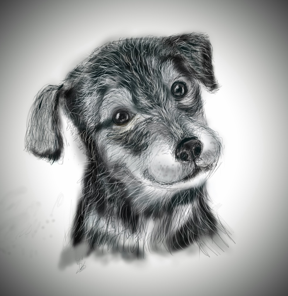sketch of dog, drawing tablet, Digital Sketch