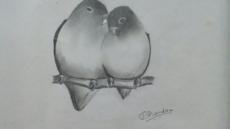 Love Birds sketches, visible invisibility
